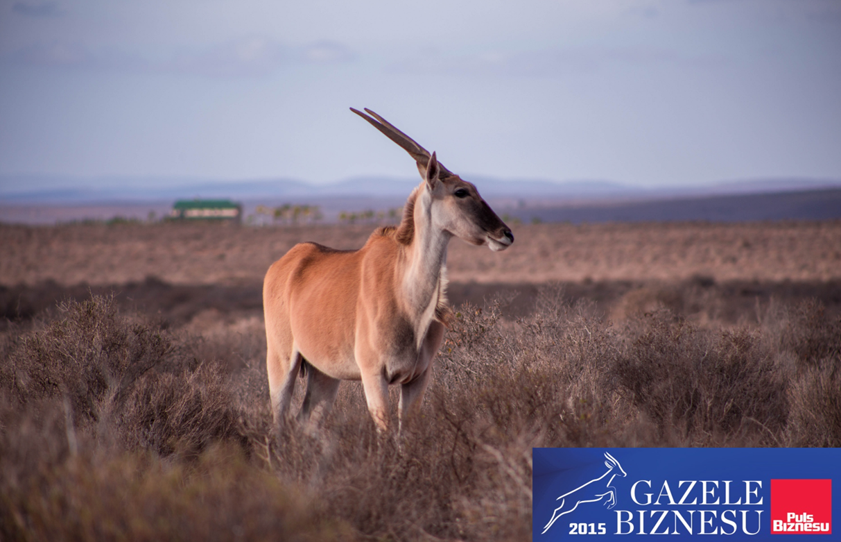 Gazelle Business Awards 2015